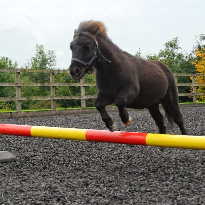 Adopt a pony - Riding for the Disabled Holidays – Disabled Horse