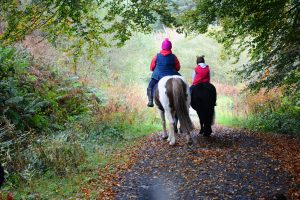 Two people riding horses in country lane.