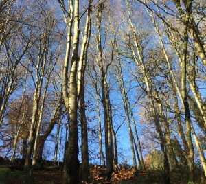 Trees at Arlington Court.
