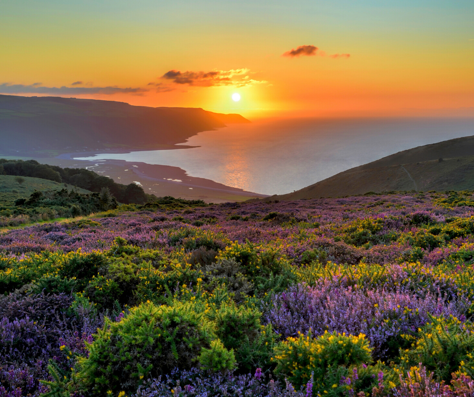 A view of the sun setting into the sea, taken from top of a hill covered in ferns and shrubs