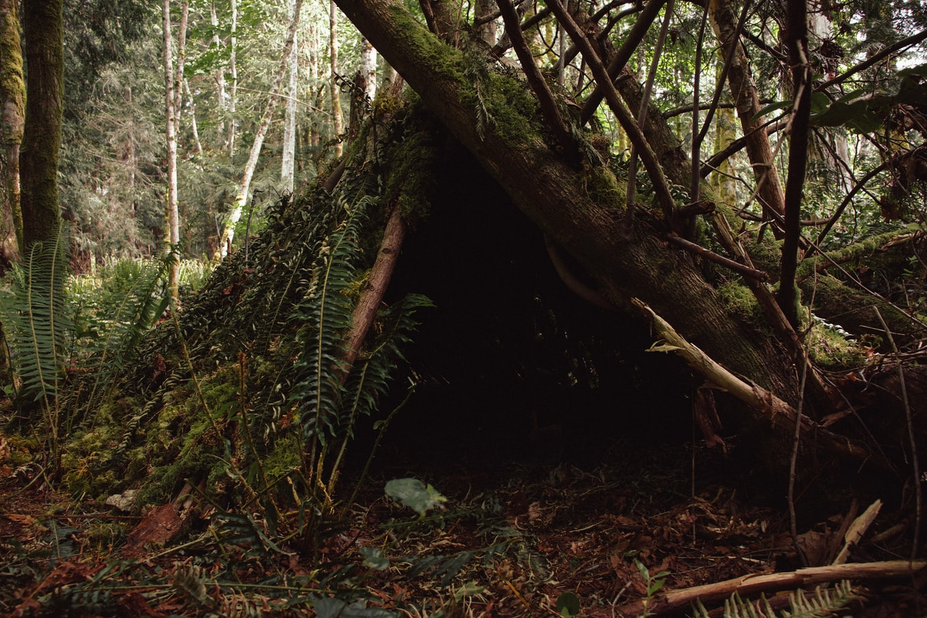 A woodland shelter made out of branches
